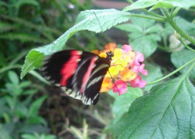 Conway Butterfly Jungle